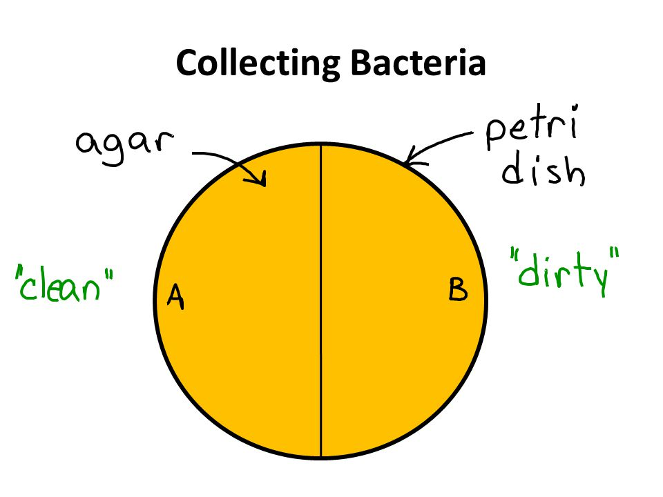 Collecting Bacteria