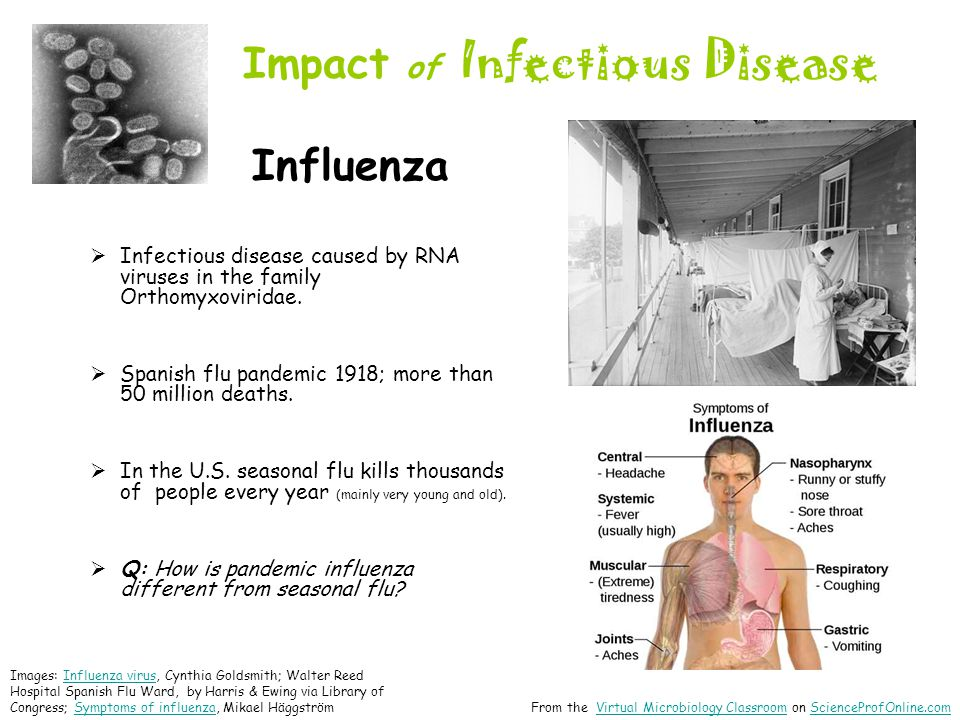 Impact of Infectious Disease Influenza  Infectious disease caused by RNA viruses in the family Orthomyxoviridae.