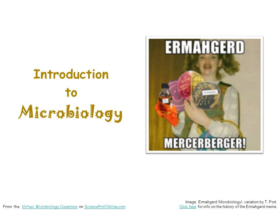 Introduction to Microbiology Image: Ermahgerd Microbiology!, variation by T.