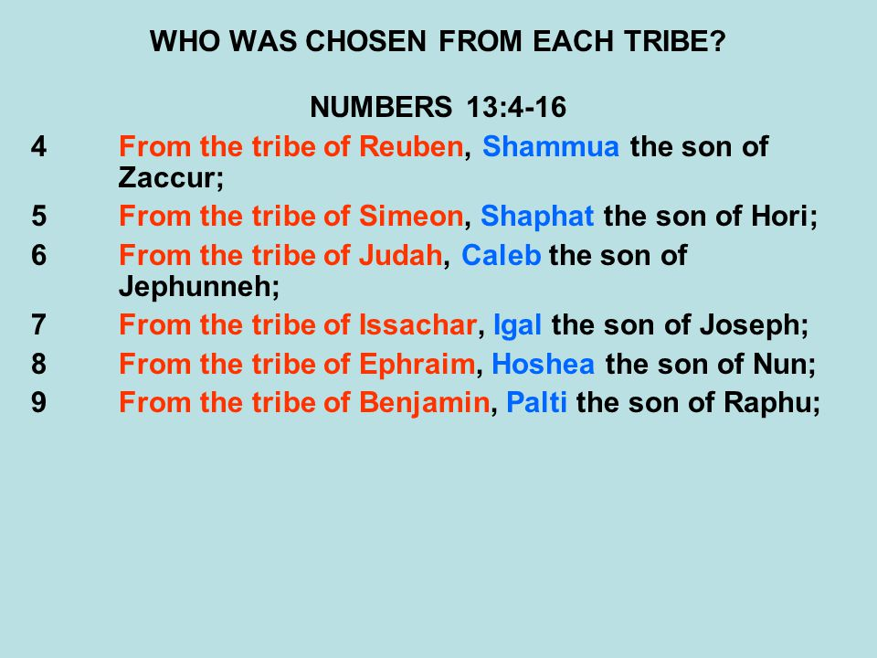 WHO WAS CHOSEN FROM EACH TRIBE? NUMBERS 13:4-16 4From the tribe of Reuben, Shammua the son of Zaccur; 5From the tribe of Simeon, Shaphat the son of Ho