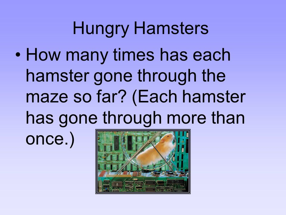 Hungry Hamsters How many times has each hamster gone through the maze so far? (Each hamster has gone through more than once.)