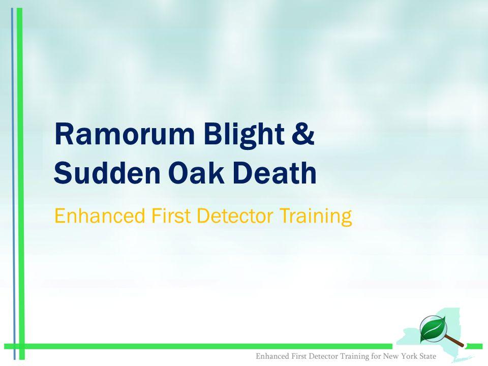 Ramorum Blight & Sudden Oak Death Enhanced First Detector Training