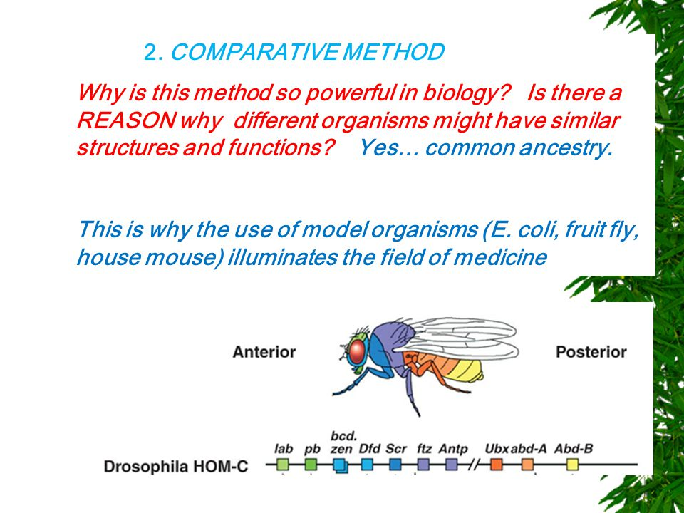 2. COMPARATIVE METHOD Why is this method so powerful in biology.