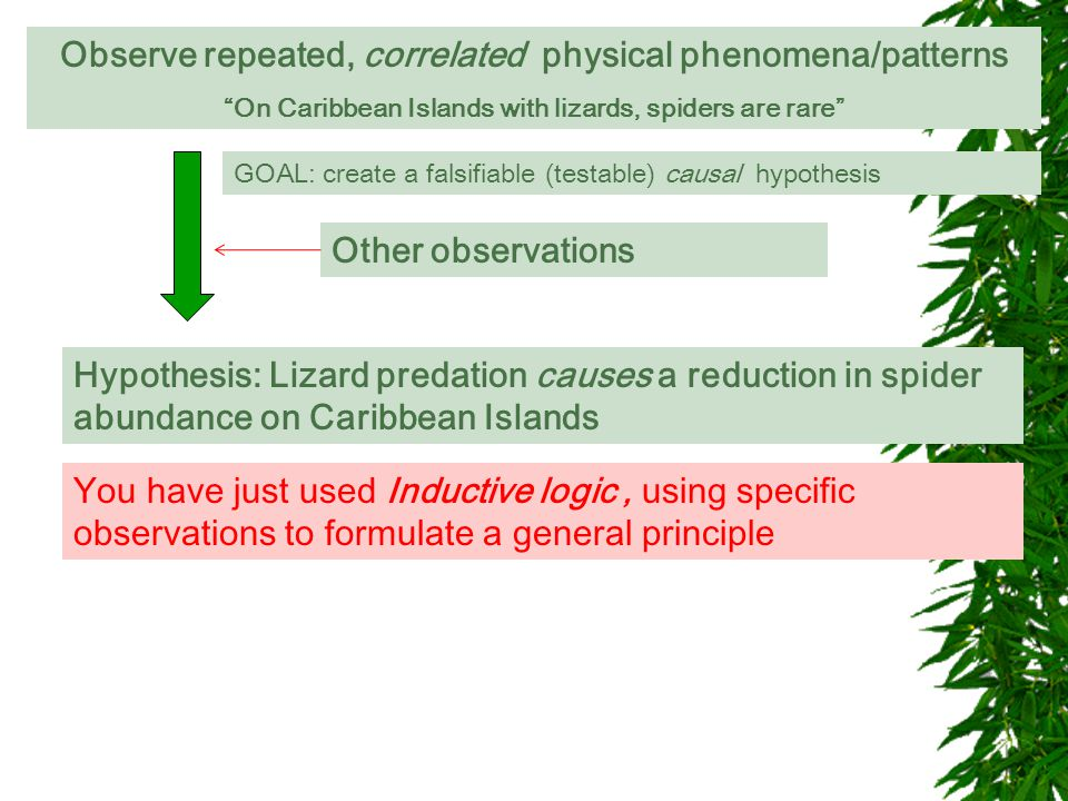Observe repeated, correlated physical phenomena/patterns On Caribbean Islands with lizards, spiders are rare GOAL: is this relationship causal GOAL: create a falsifiable (testable) causal hypothesis Hypothesis: Lizard predation causes a reduction in spider abundance on Caribbean Islands Other observations You have just used Inductive logic, using specific observations to formulate a general principle