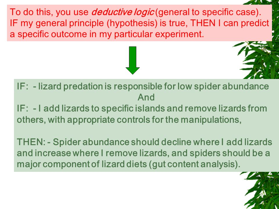 IF: - lizard predation is responsible for low spider abundance And IF: - I add lizards to specific islands and remove lizards from others, with appropriate controls for the manipulations, THEN: - Spider abundance should decline where I add lizards and increase where I remove lizards, and spiders should be a major component of lizard diets (gut content analysis).