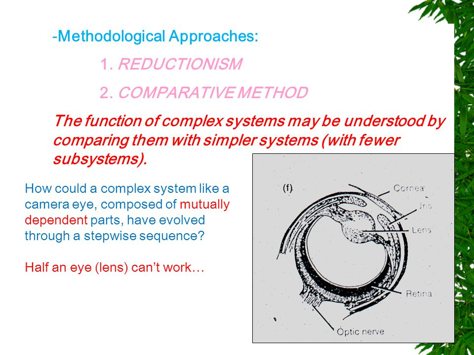 -Methodological Approaches: 1. REDUCTIONISM 2.
