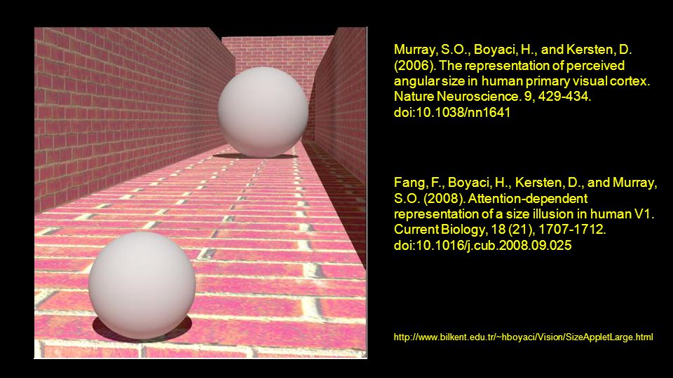 Murray, S.O., Boyaci, H., and Kersten, D. (2006). The representation of perceived angular size in human primary visual cortex. Nature Neuroscience. 9,
