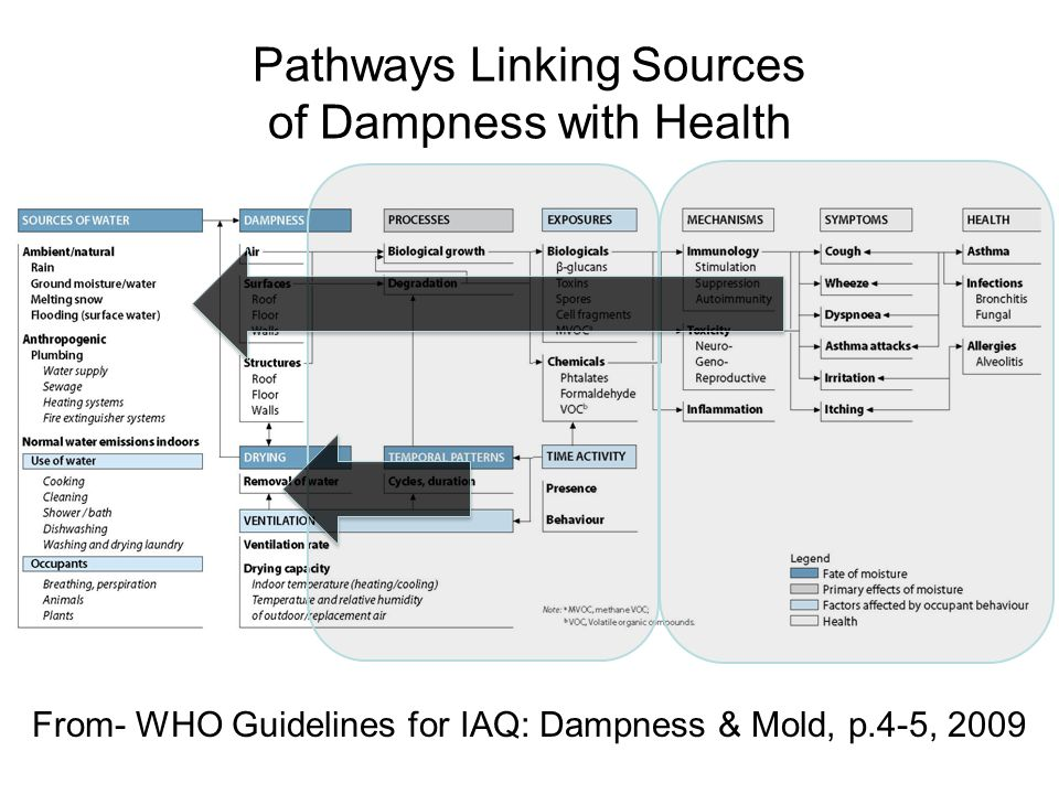 Pathways Linking Sources of Dampness with Health From- WHO Guidelines for IAQ: Dampness & Mold, p.4-5, 2009
