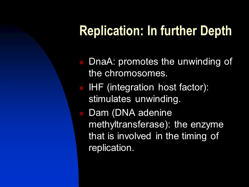 Replication: In further Depth DnaA: promotes the unwinding of the chromosomes.