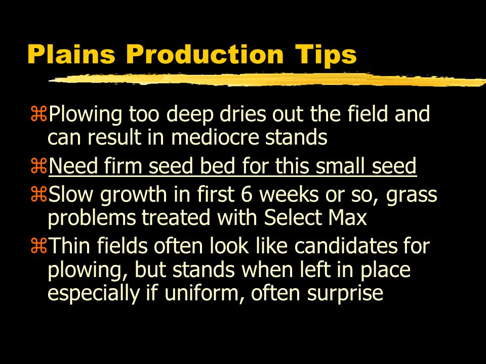 Plains Production Tips zPlowing too deep dries out the field and can result in mediocre stands zNeed firm seed bed for this small seed zSlow growth in