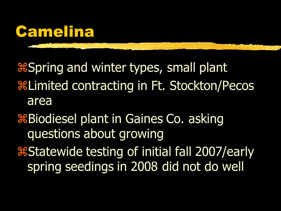 Camelina zSpring and winter types, small plant zLimited contracting in Ft. Stockton/Pecos area zBiodiesel plant in Gaines Co. asking questions about g
