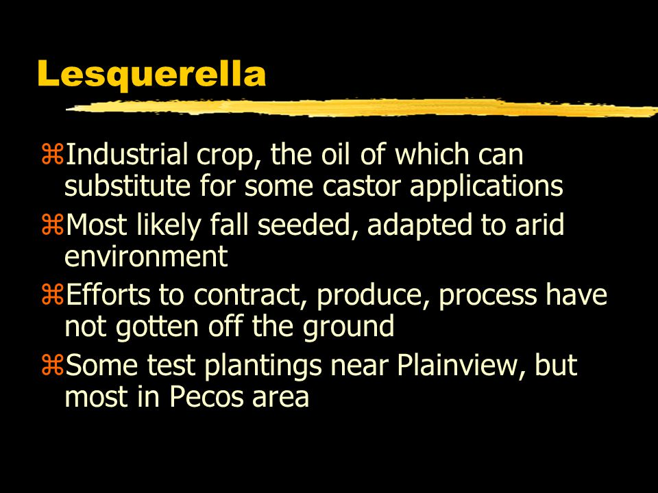 Lesquerella zIndustrial crop, the oil of which can substitute for some castor applications zMost likely fall seeded, adapted to arid environment zEffo