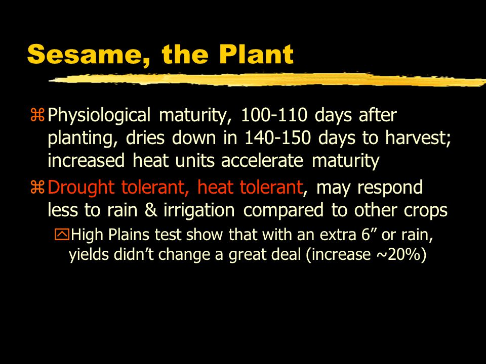 Sesame, the Plant zPhysiological maturity, 100-110 days after planting, dries down in 140-150 days to harvest; increased heat units accelerate maturit