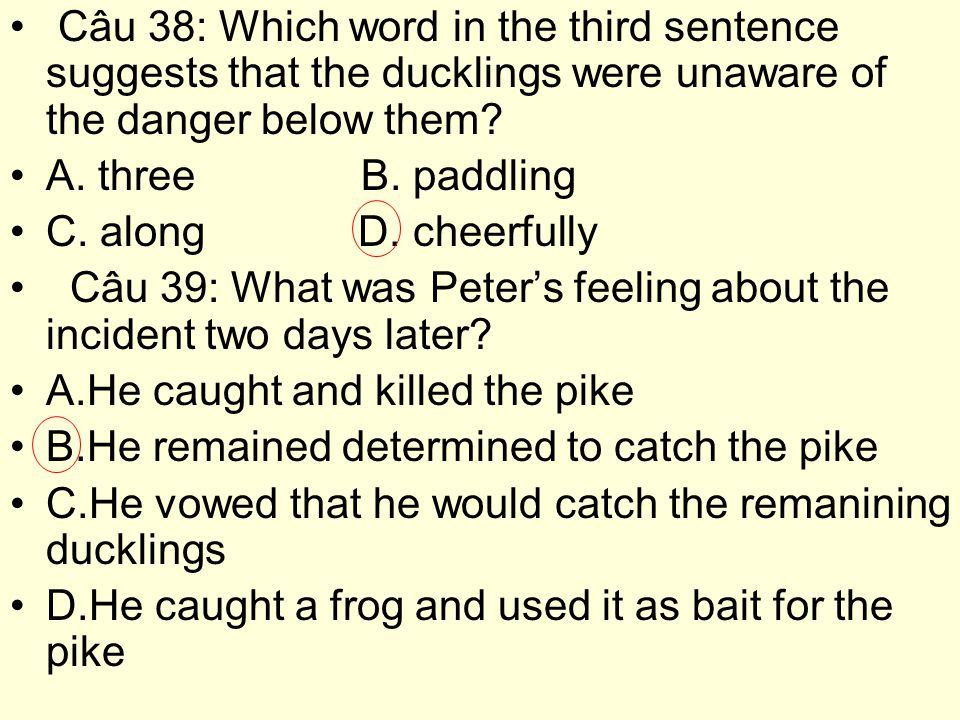 Câu 38: Which word in the third sentence suggests that the ducklings were unaware of the danger below them.