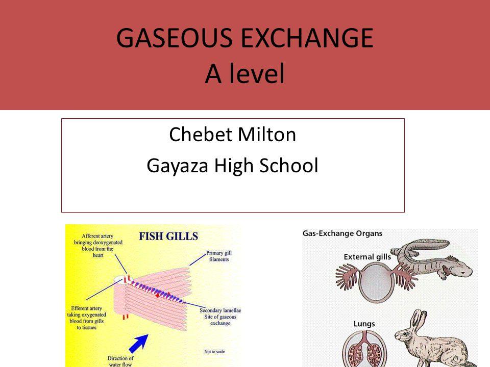 GASEOUS EXCHANGE A level Chebet Milton Gayaza High School