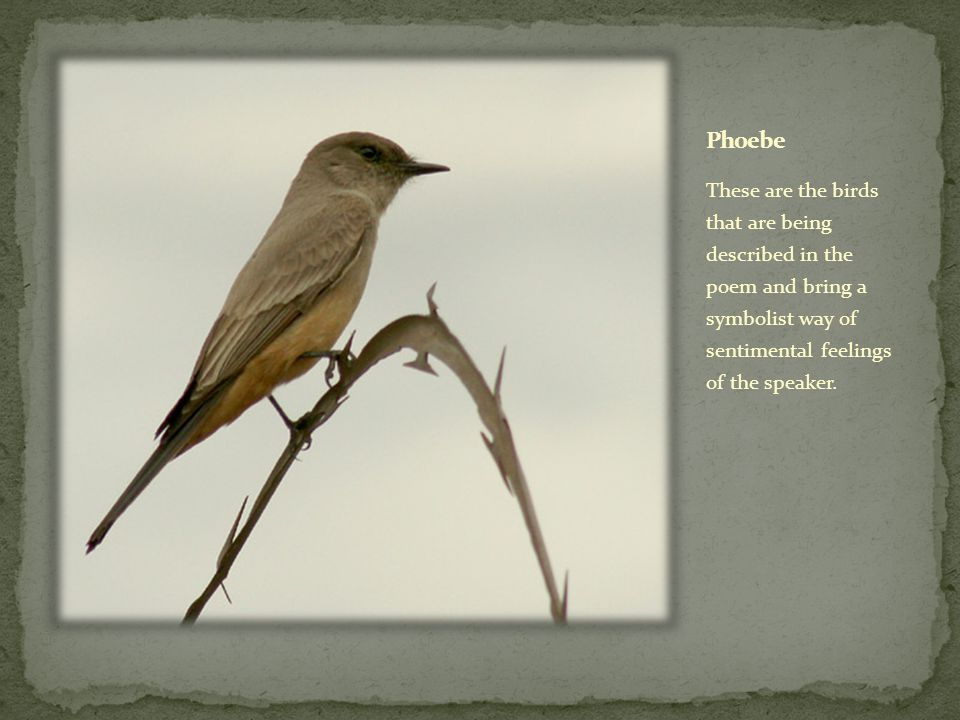 These are the birds that are being described in the poem and bring a symbolist way of sentimental feelings of the speaker.