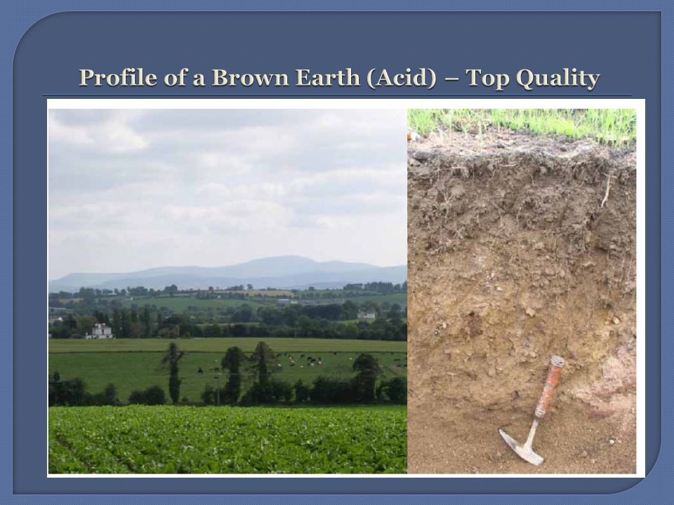 A1This is a mature well- drained mineral soil – well-aerated sand, silt and clay, friable, good structure, good root penetration (60cm) A2Accumulation of leached calcium ions CCalcareous parent material –limestone – porous and permeable