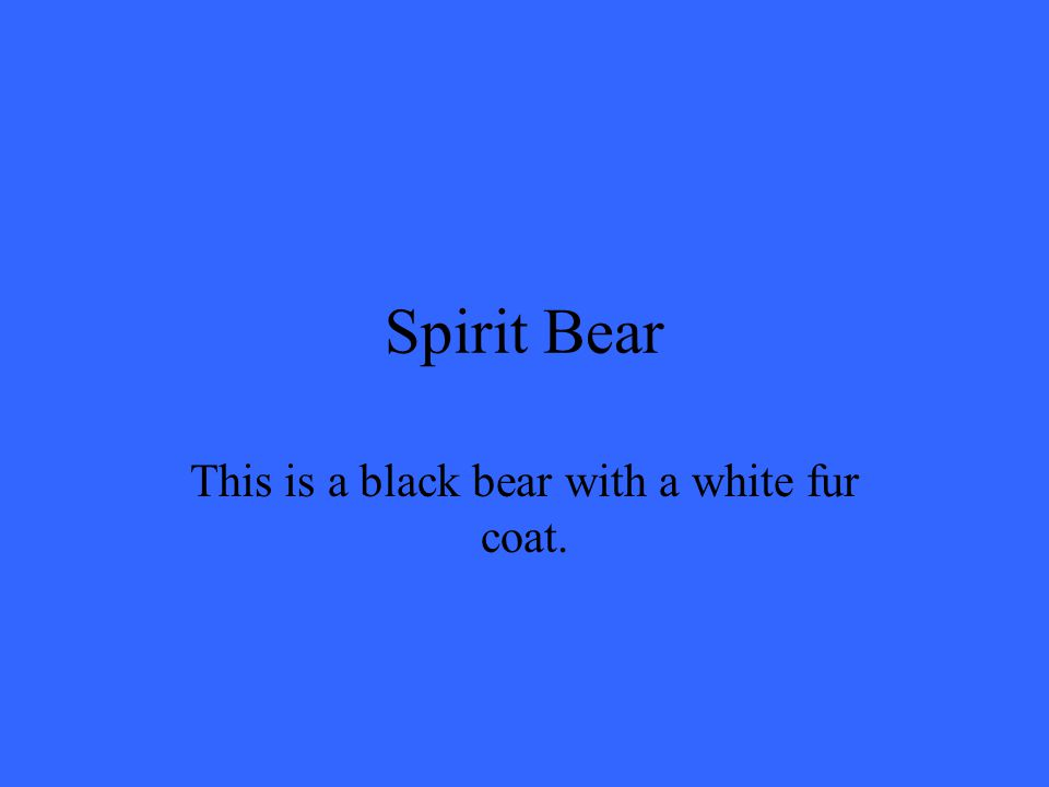 This is a black bear with a white fur coat. Spirit Bear