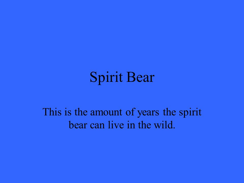 Spirit Bear This is the amount of years the spirit bear can live in the wild.