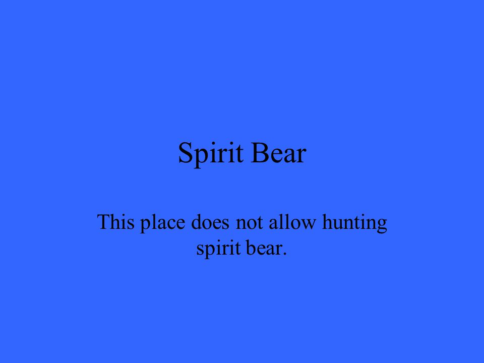 Spirit Bear This place does not allow hunting spirit bear.