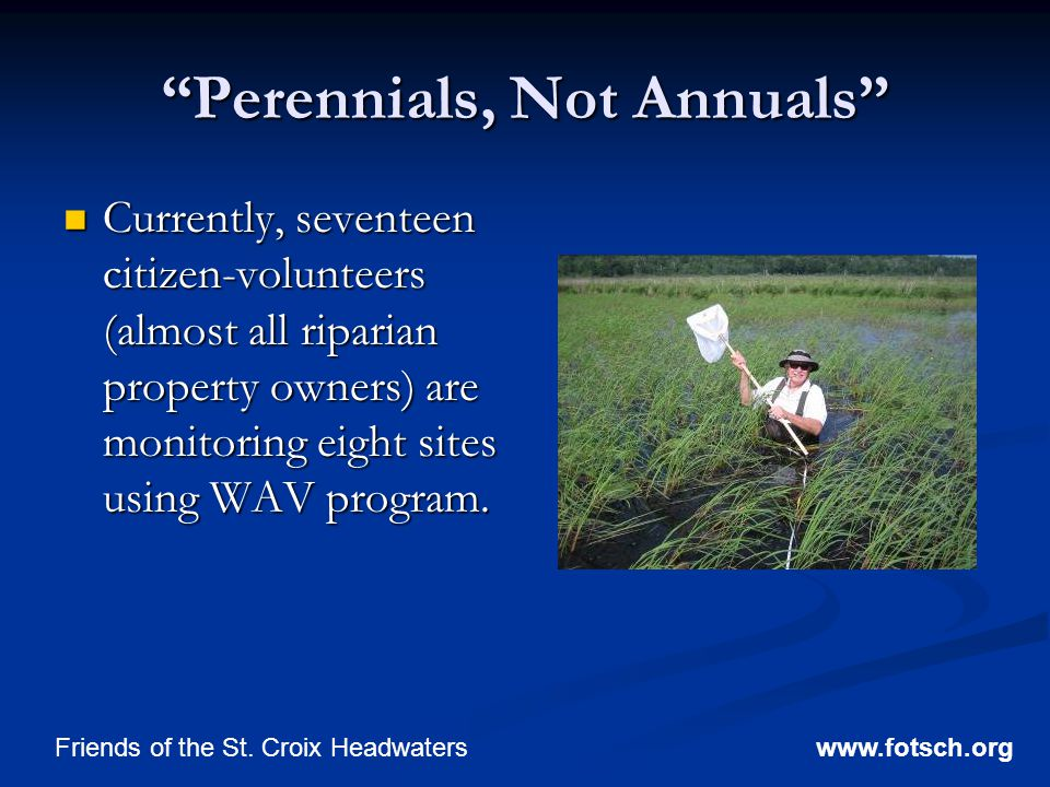 Perennials, Not Annuals Currently, seventeen citizen-volunteers (almost all riparian property owners) are monitoring eight sites using WAV program.