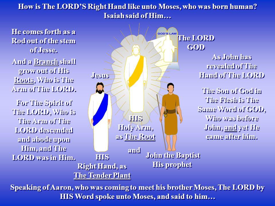 HIS Holy Arm, as The Root HIS Holy Arm, as The Root The LORD GOD The LORD GOD How is The LORD'S Right Hand like unto Moses, who was born human.