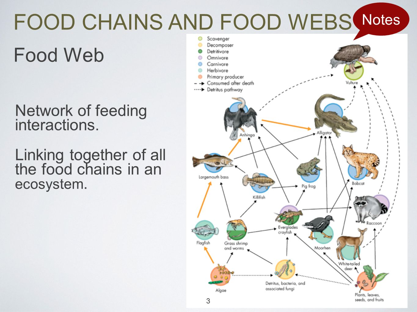 FOOD CHAINS AND FOOD WEBS Notes Food Web Network of feeding interactions.