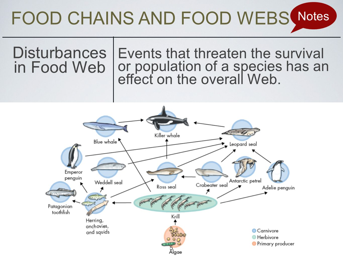 FOOD CHAINS AND FOOD WEBS Notes Disturbances in Food Web Events that threaten the survival or population of a species has an effect on the overall Web.