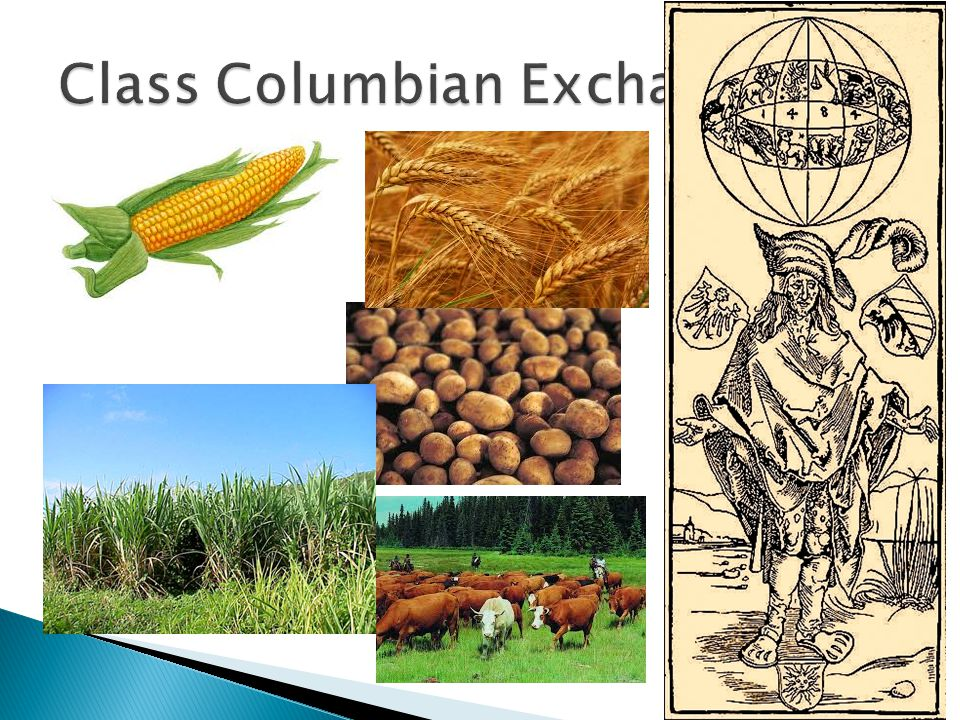 The Columbian Exchange in Early Modern P. What Plants and Animals came to Americas? What returned to Europe? What types of sources used to describe th