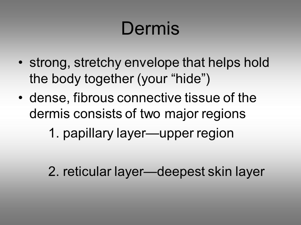 Dermis strong, stretchy envelope that helps hold the body together (your hide ) dense, fibrous connective tissue of the dermis consists of two major regions 1.