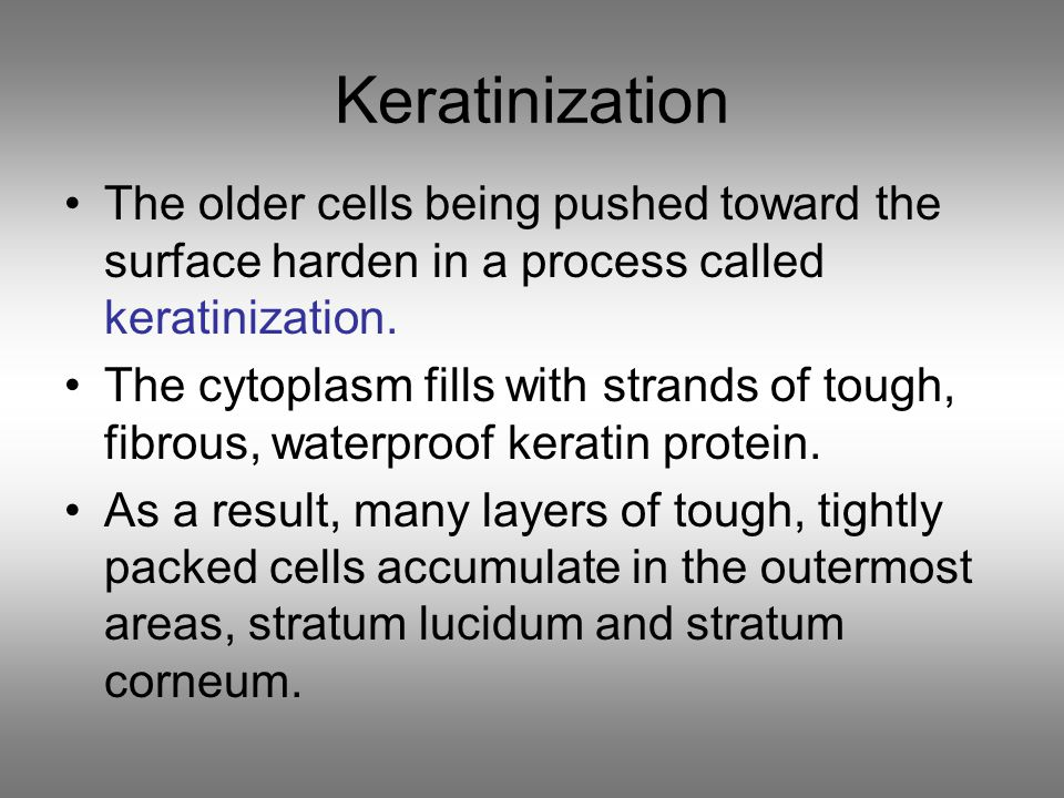 –stratum lucidum *found only on hands and soles of feet –stratum corneum *outermost layer *20 to 30 cell layers thick *dead cells that form this layer eventually are shed