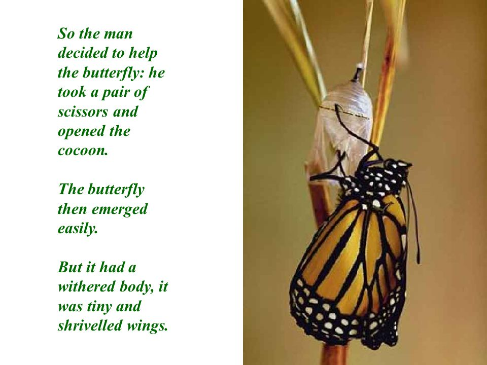 The man continued to watch because he expected that, at any moment, the wings would open, enlarge and expand, to be able to support the butterfly's body, and become firm.