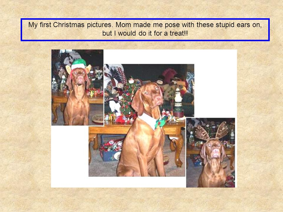 My first Christmas pictures. Mom made me pose with these stupid ears on, but I would do it for a treat!!