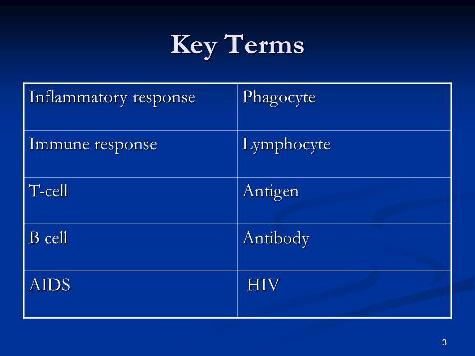 3 Key Terms Inflammatory response Phagocyte Immune response Lymphocyte T-cellAntigen B cell Antibody AIDS HIV HIV