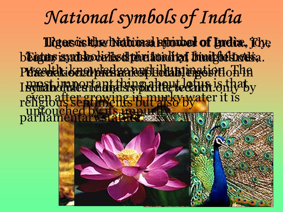National symbols of India Tiger is the national animal of India. Tiger is also called the lord of Jungles. As the national animal of India, tiger symb