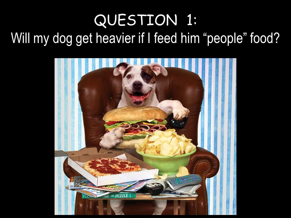 "QUESTION 1: Will my dog get heavier if I feed him ""people"" food?"