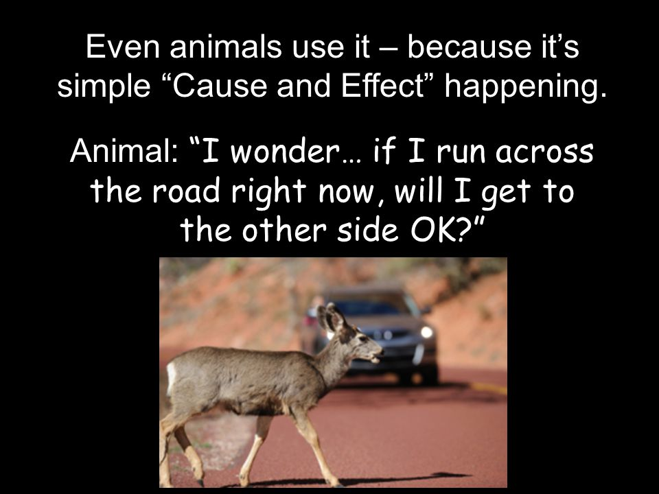 "Even animals use it – because it's simple ""Cause and Effect"" happening. Animal: ""I wonder… if I run across the road right now, will I get to the other"