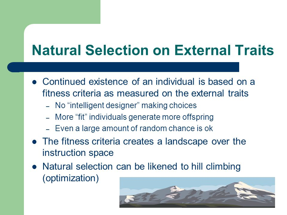 Natural Selection on External Traits Continued existence of an individual is based on a fitness criteria as measured on the external traits – No intelligent designer making choices – More fit individuals generate more offspring – Even a large amount of random chance is ok The fitness criteria creates a landscape over the instruction space Natural selection can be likened to hill climbing (optimization)