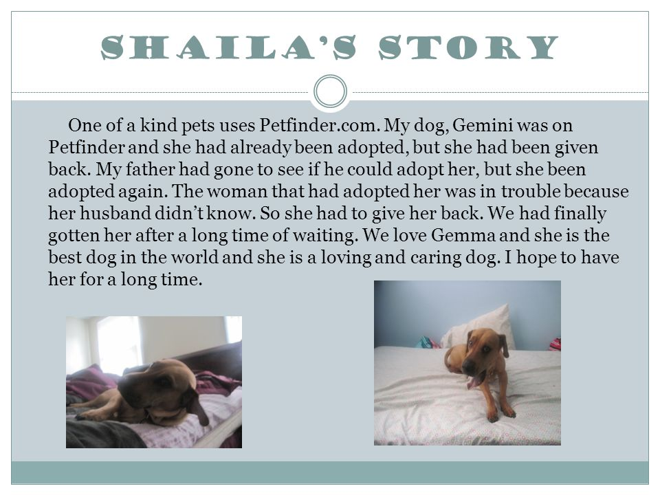 Shaila's Story One of a kind pets uses Petfinder.com.