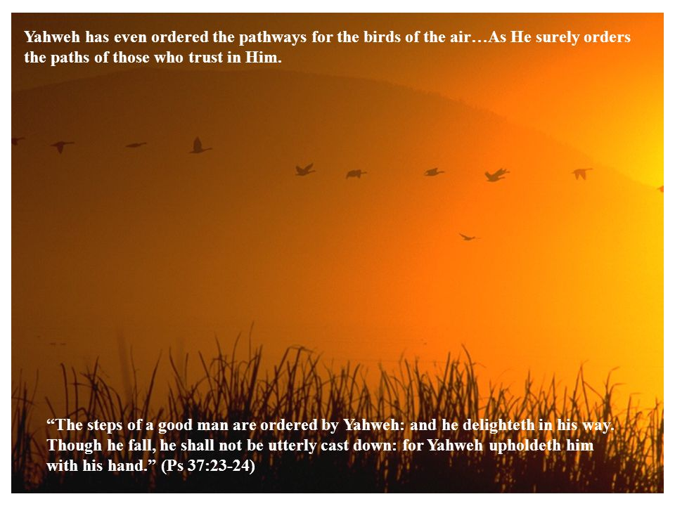 Yahweh has even ordered the pathways for the birds of the air…As He surely orders the paths of those who trust in Him.