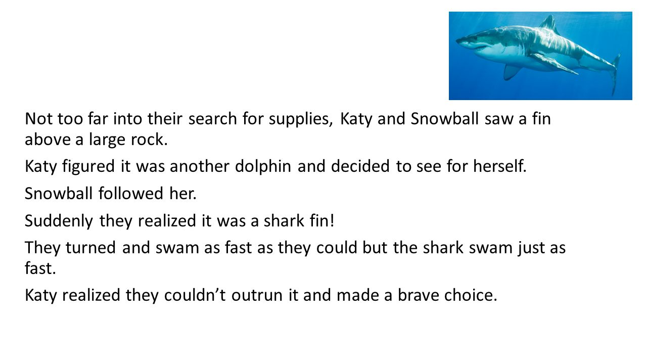 Not too far into their search for supplies, Katy and Snowball saw a fin above a large rock. Katy figured it was another dolphin and decided to see for