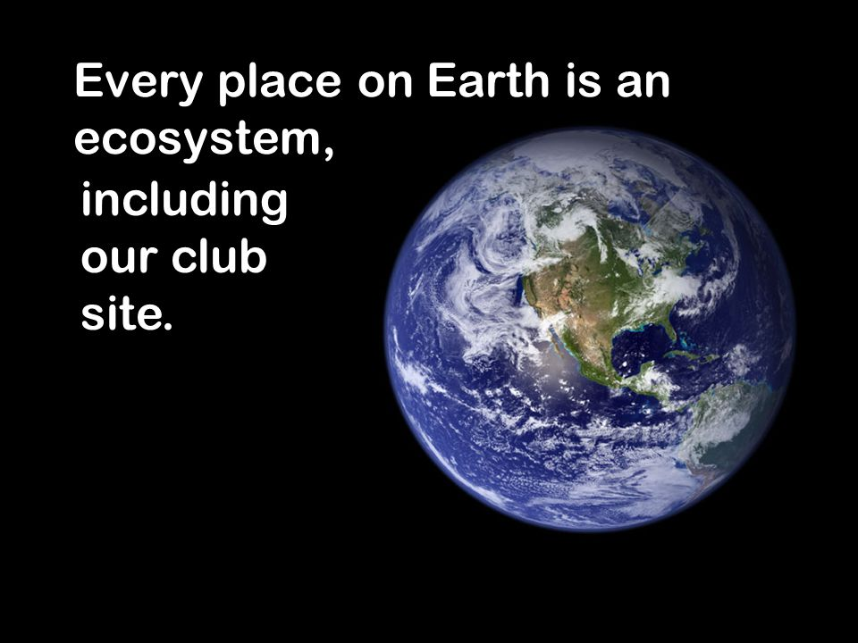 2 Every place on Earth is an ecosystem, including our club site.