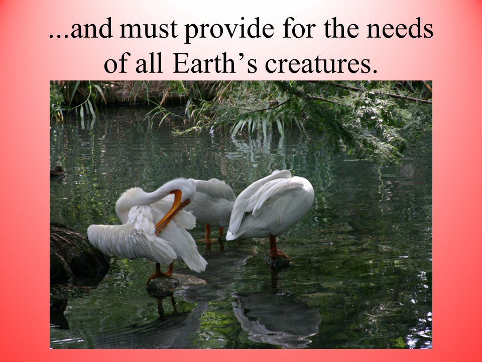 ...and must provide for the needs of all Earth's creatures.