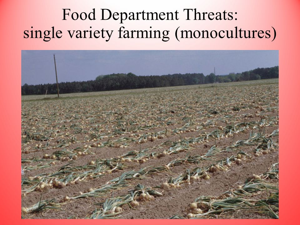 Food Department Threats: single variety farming (monocultures)
