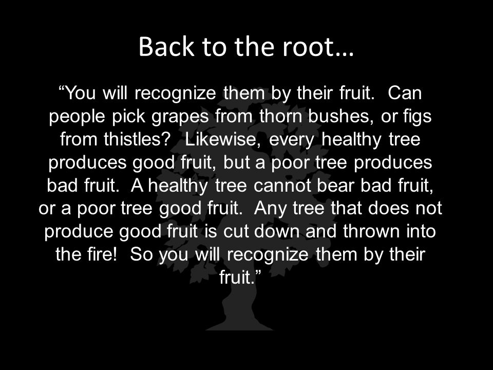 """Back to the root… """"You will recognize them by their fruit. Can people pick grapes from thorn bushes, or figs from thistles? Likewise, every healthy tr"""