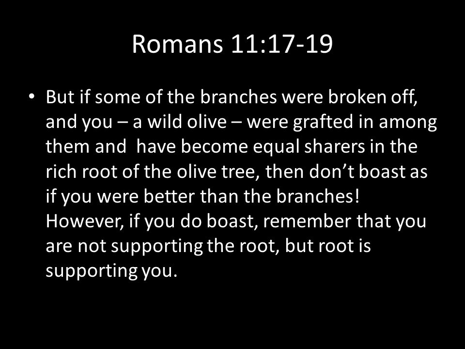 Romans 11:17-19 But if some of the branches were broken off, and you – a wild olive – were grafted in among them and have become equal sharers in the rich root of the olive tree, then don't boast as if you were better than the branches.
