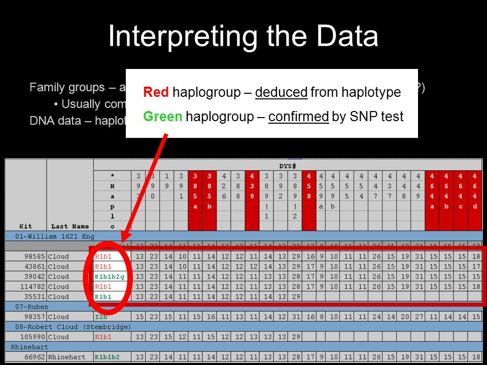 Interpreting the Data Family groups – assigned by project administrator (arbitrary ? pedigree ?) Usually common surname or pedigree. DNA data – haplot