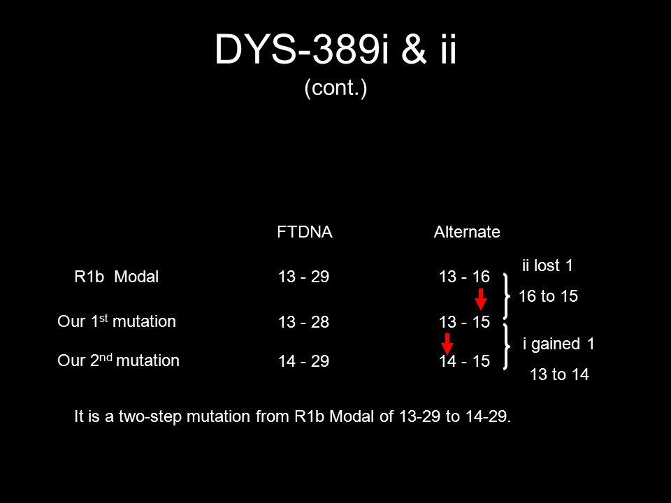 DYS-389i & ii (cont.) FTDNAAlternate R1b Modal13 - 2913 - 16 Our 1 st mutation 13 - 2813 - 15 Our 2 nd mutation 14 - 2914 - 15 ii lost 1 16 to 15 i ga