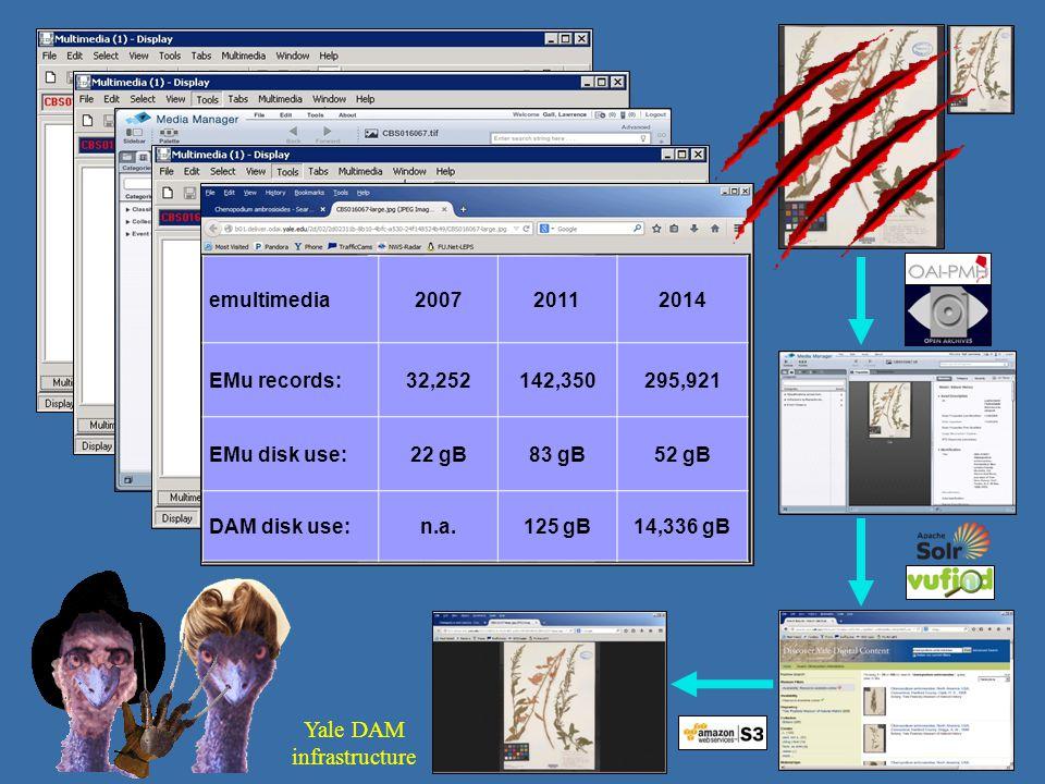 emultimedia200720112014 EMu records:32,252142,350295,921 EMu disk use:22 gB83 gB52 gB DAM disk use:n.a.125 gB14,336 gB Yale DAM infrastructure