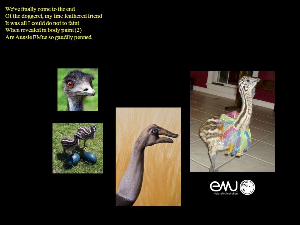 We ve finally come to the end Of the doggerel, my fine feathered friend It was all I could do not to faint When revealed in body paint (2) Are Aussie EMus so gaudily penned